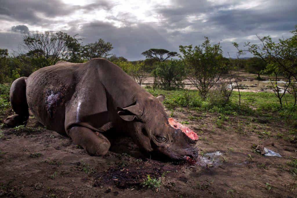 Brent Stirton - Afrique du Sud